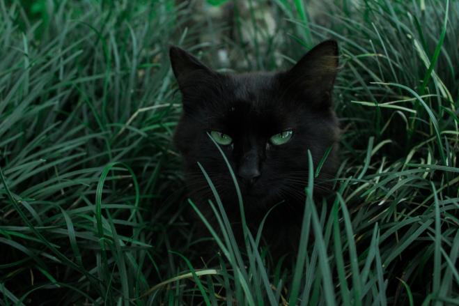Ecco La Verità Sul Gatto Nero E La Superstizione Della Sfortuna