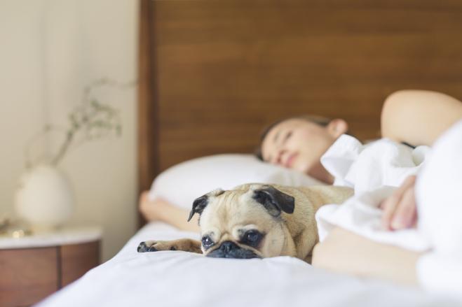 Le Donne Preferiscono Dormire Con Il Cane Invece Che Con Il Proprio