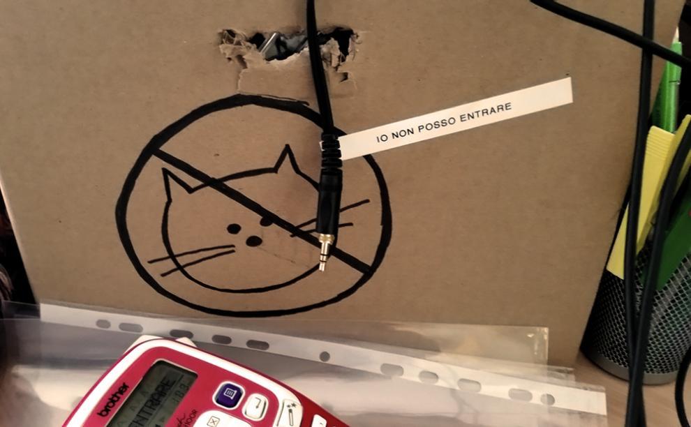 Gatti tra le scatole (e nelle scatole)   foto 1 di 9   radio 105