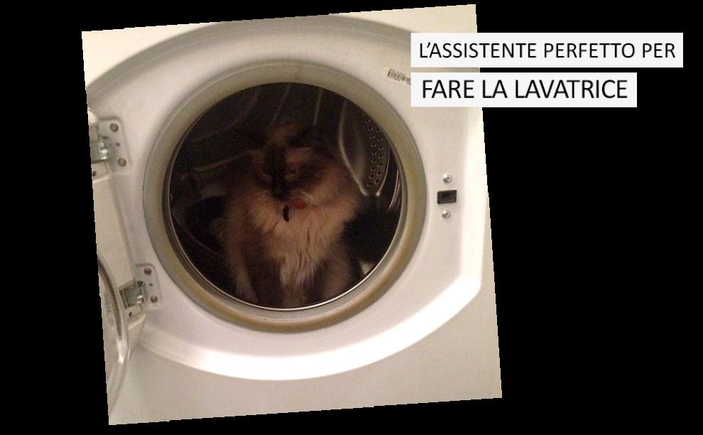 L'assistente perfetto per le faccende domestiche? il tuo gatto ...
