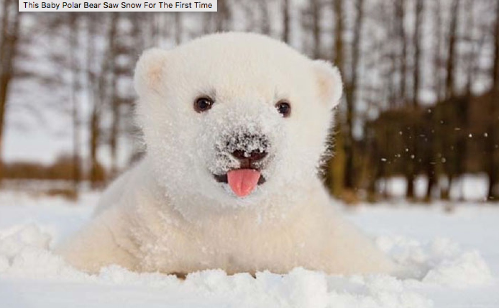 Le Reazioni Di 8 Animali Dolcissimi Che Vedono La Neve Per